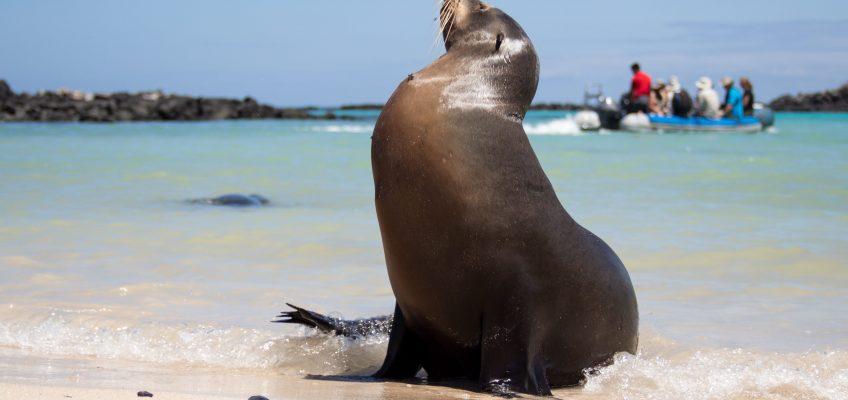 Visiting the Galapagos Islands