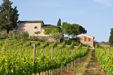 Rome: A Perfect Destination for Wine Lovers